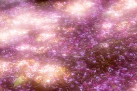 sakura song