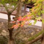 【香川県のこんぴらさん観光】金毘羅さんの裏参道は紅葉の名所!