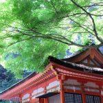 【うどん屋巡りからこんぴらさんまで】香川県観光はほぼグルメ旅!立ち寄ったオススメのお店まとめ!