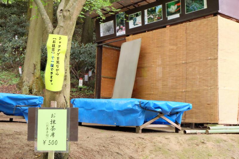 ookuboji yasobaan shakunage (18)