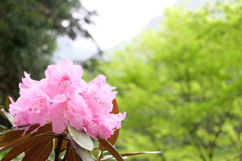 ookuboji yasobaan shakunage (21)