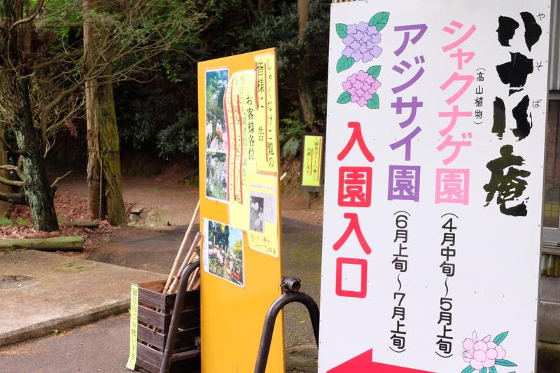 ookuboji yasobaan shakunage (5)
