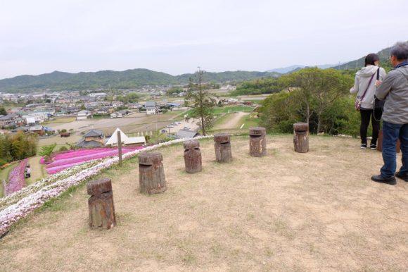 shibazakurafuji (11)