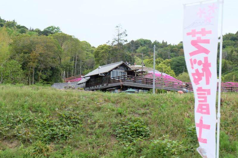 shibazakurafuji