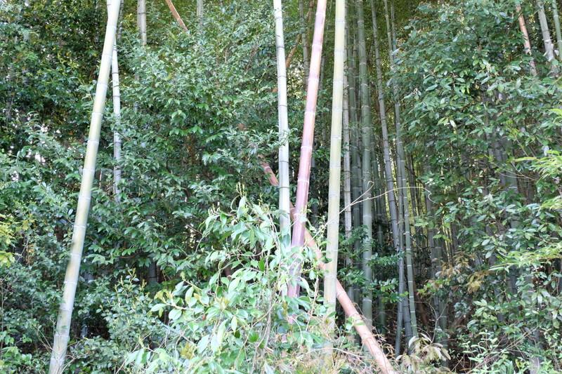 takenokohori-dougu-kotsu (1)