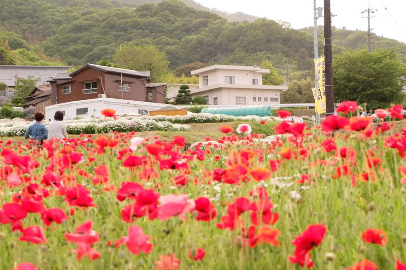 flowerpark-urashima (13)