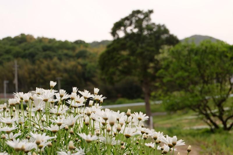flowerpark-urashima (20)