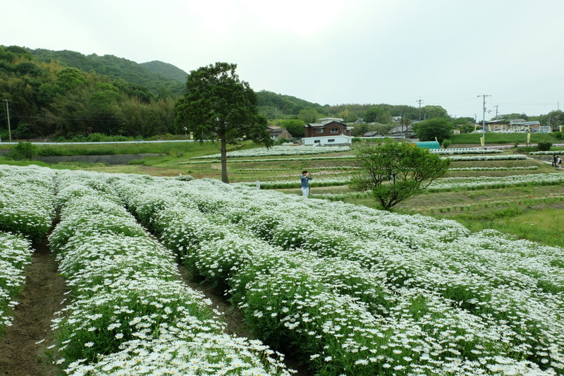 flowerpark-urashima (22)