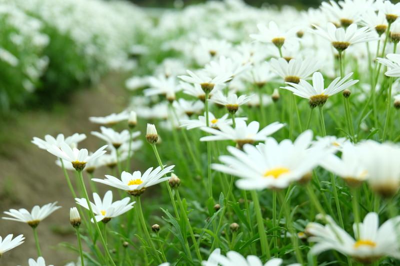 flowerpark-urashima (23)