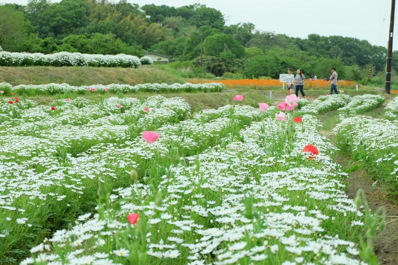flowerpark-urashima (28)