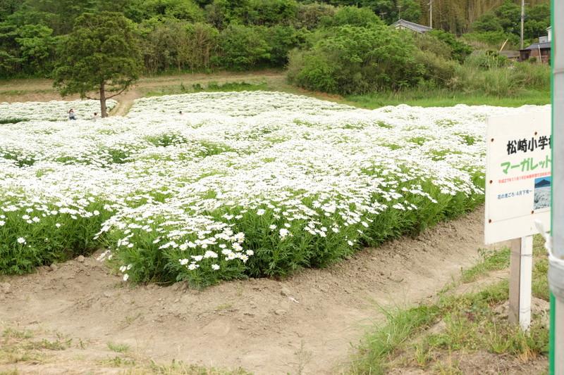 flowerpark-urashima (35)