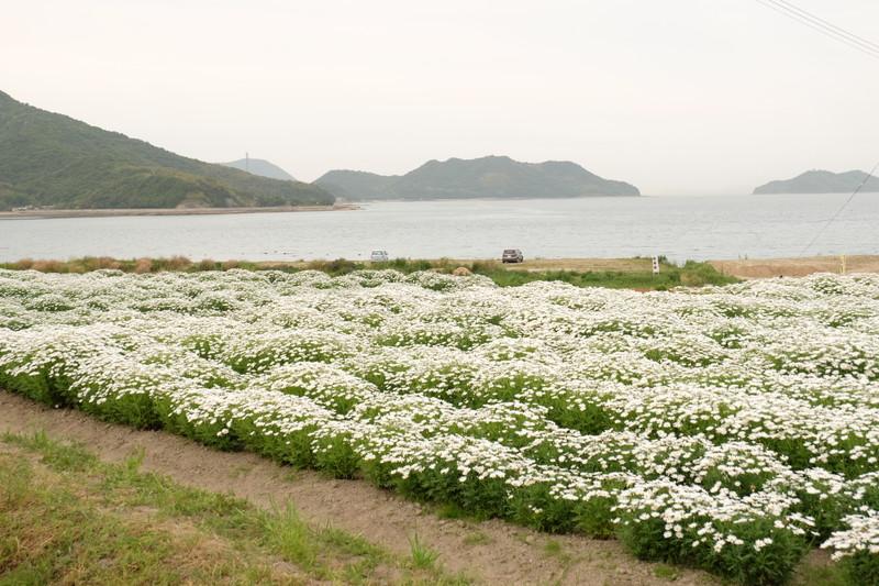flowerpark-urashima (39)
