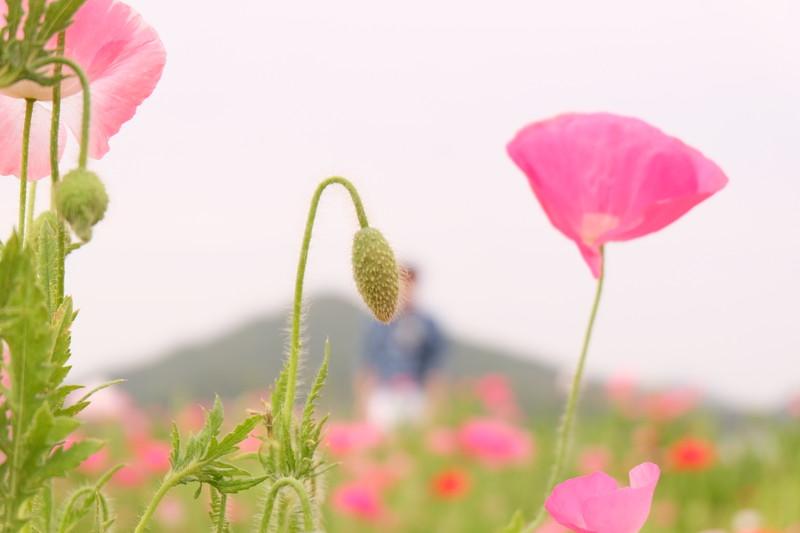 flowerpark-urashima (6)