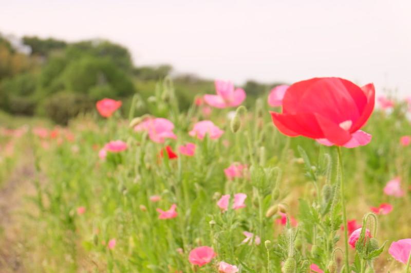 flowerpark-urashima (7)