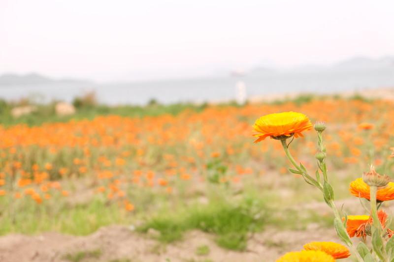 flowerpark-urashima (9)