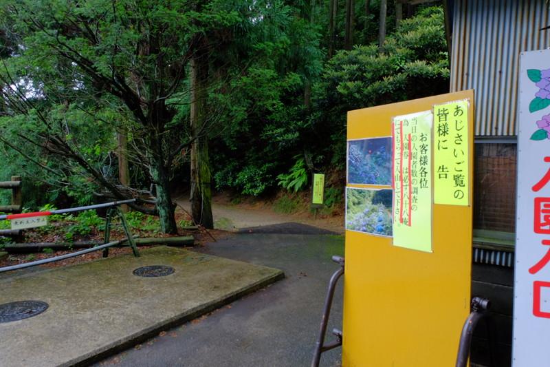 ookuboji-ajisai (2)