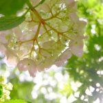 【88番札所結願の寺:香川県の大窪寺の紫陽花が綺麗】八十八庵であじさい祭が開催中!
