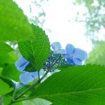 【善通寺市出釈迦寺:奥の院へ続く参道で紫陽花が見頃】水曜どうでしょうロケ地としても有名!