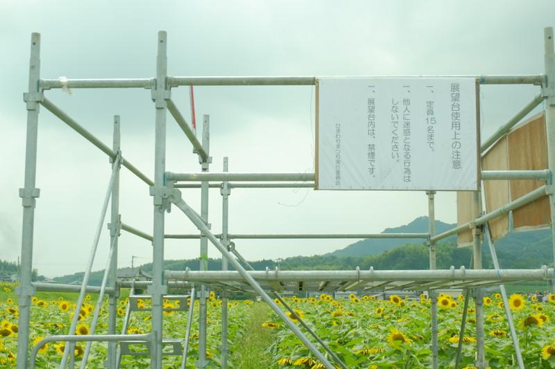 himawarinosato-mannou (14)