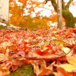 【ロープウェイからの紅葉が綺麗!徳島県三好市・箸蔵寺】金比羅宮に縁のある寺院!